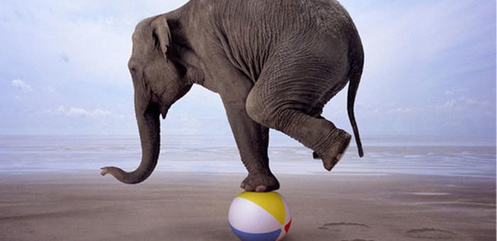 balancing-act-elephant-700x340